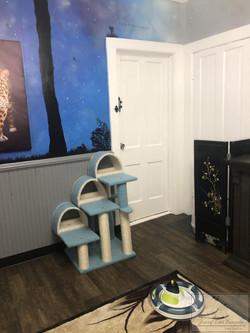 Kitten Room