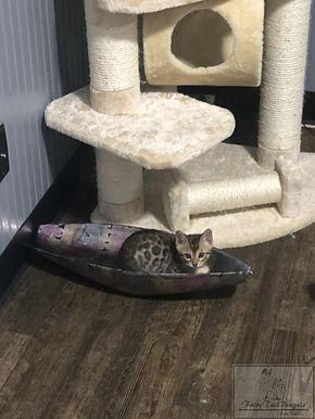 Kitties011.jpg