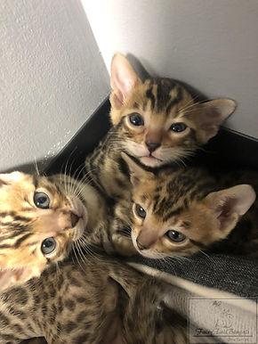 Kittens25.jpg