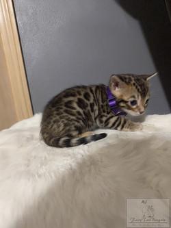 KittyPRPL03