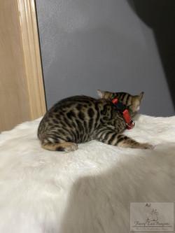 KittyRED03