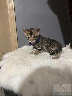 KittyPRPL02