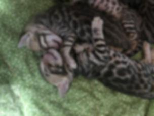 Kittens34_edited.jpg