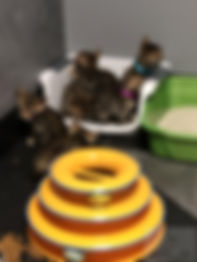 Kittens6.jpg