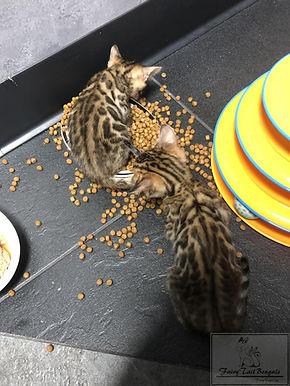 Kittens5.jpg