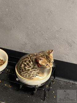 Kitty23