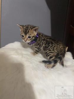 KittyPRPL04