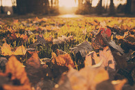 Autumn Immunity: Getting a Head Start on Your 2020 Health