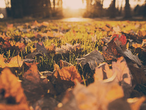 These days of Autumn...