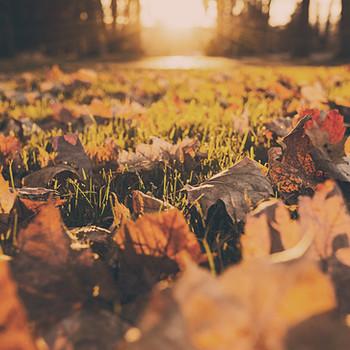 Balance your Autumn Energy for Optimal Health