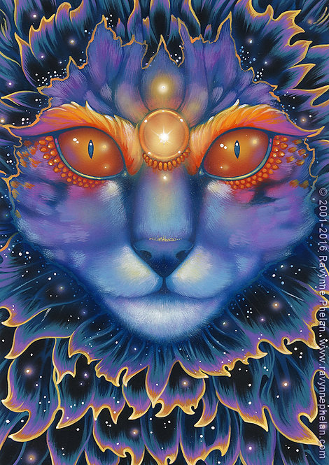 The Universal Cat