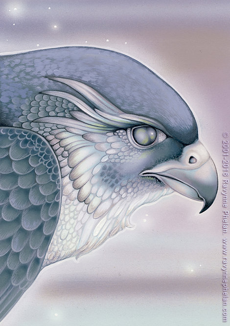Storm Falcon