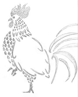 Croquis Coq
