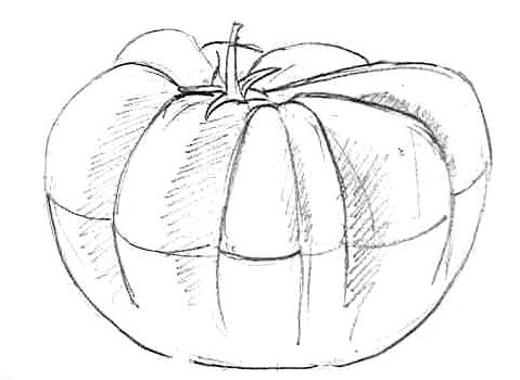 Croquis Tomate