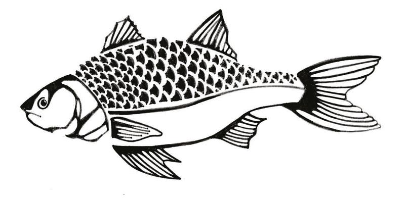 Croquis poisson