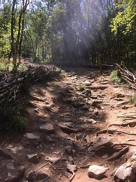 Technical Mendip Path.jpg