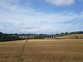 Shepton Viaduct.jpg