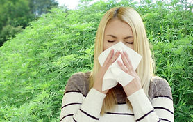Female_sneeze_with_Ragweed-scaled_edited