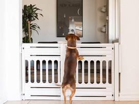 Choisir une barrière pour son animal de compagnie