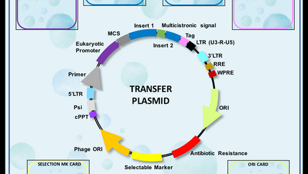Build Your Plasmid - THE GAME