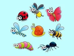Insecten: De zand-/watertafel