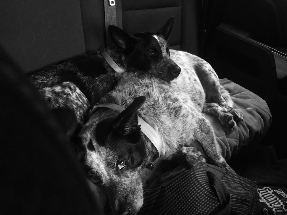 Mylee loves to be close to her older sister Meeka, especially on car rides