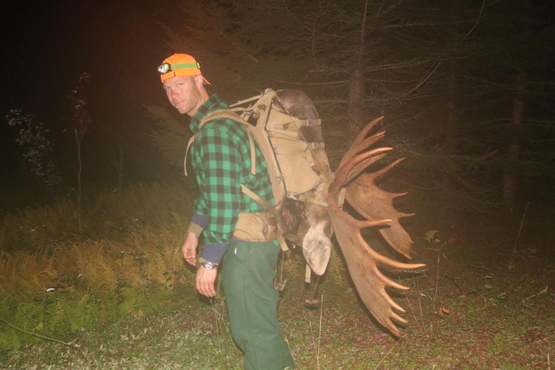 Quartered out moose
