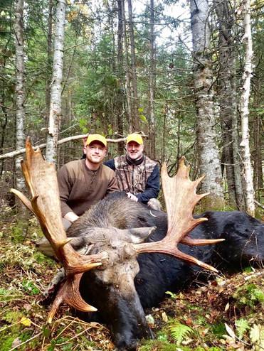 trophy maine moose