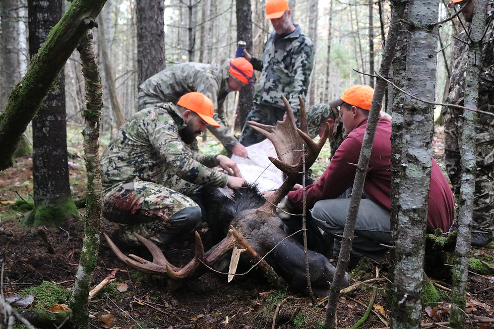 maine moose hunt