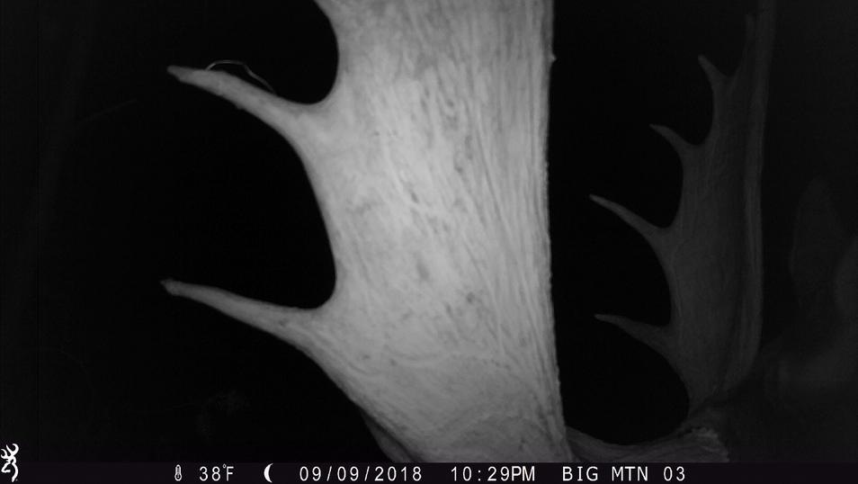 moose on camera