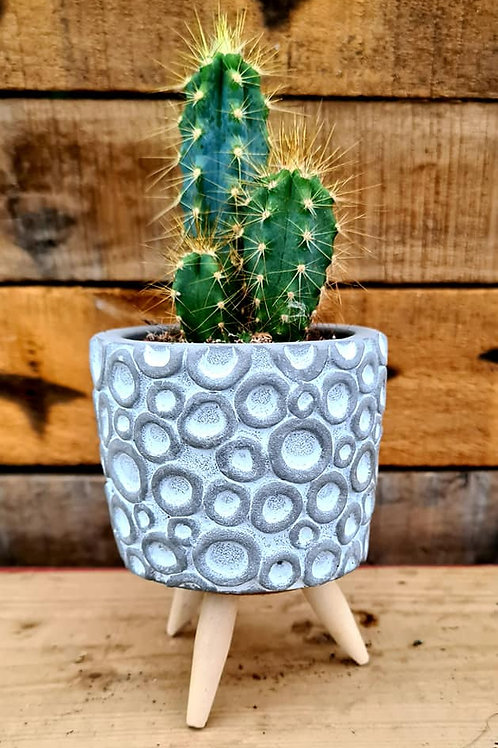 Coastal Succulents, Cacti & Alpines  Hand-finished Pots with small Cacti