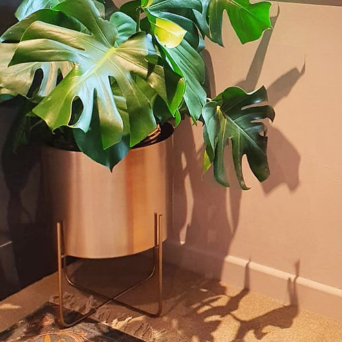 Price and Coco Interiors Olivia Gold Plant Steel Pot