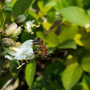 L'apicoltore? Un lavoro per tutti!