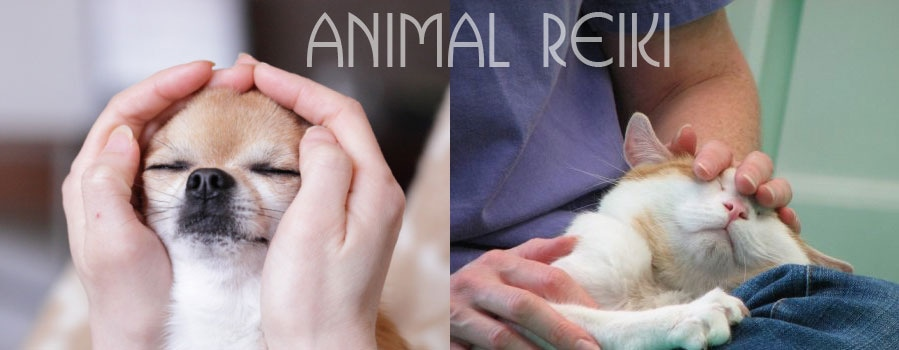 Reiki for pets