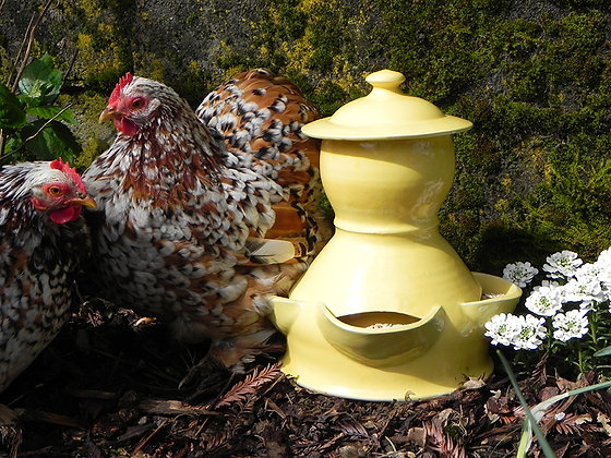 Ceramic Chicken Feeder, Medium