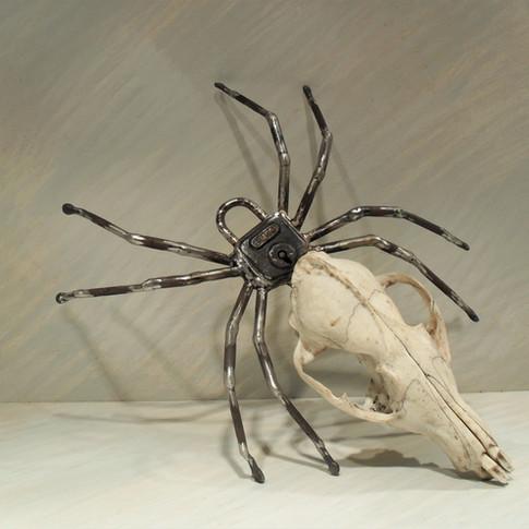 araignée vendue