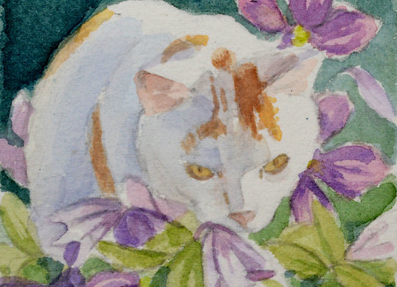 Cat and Clematis