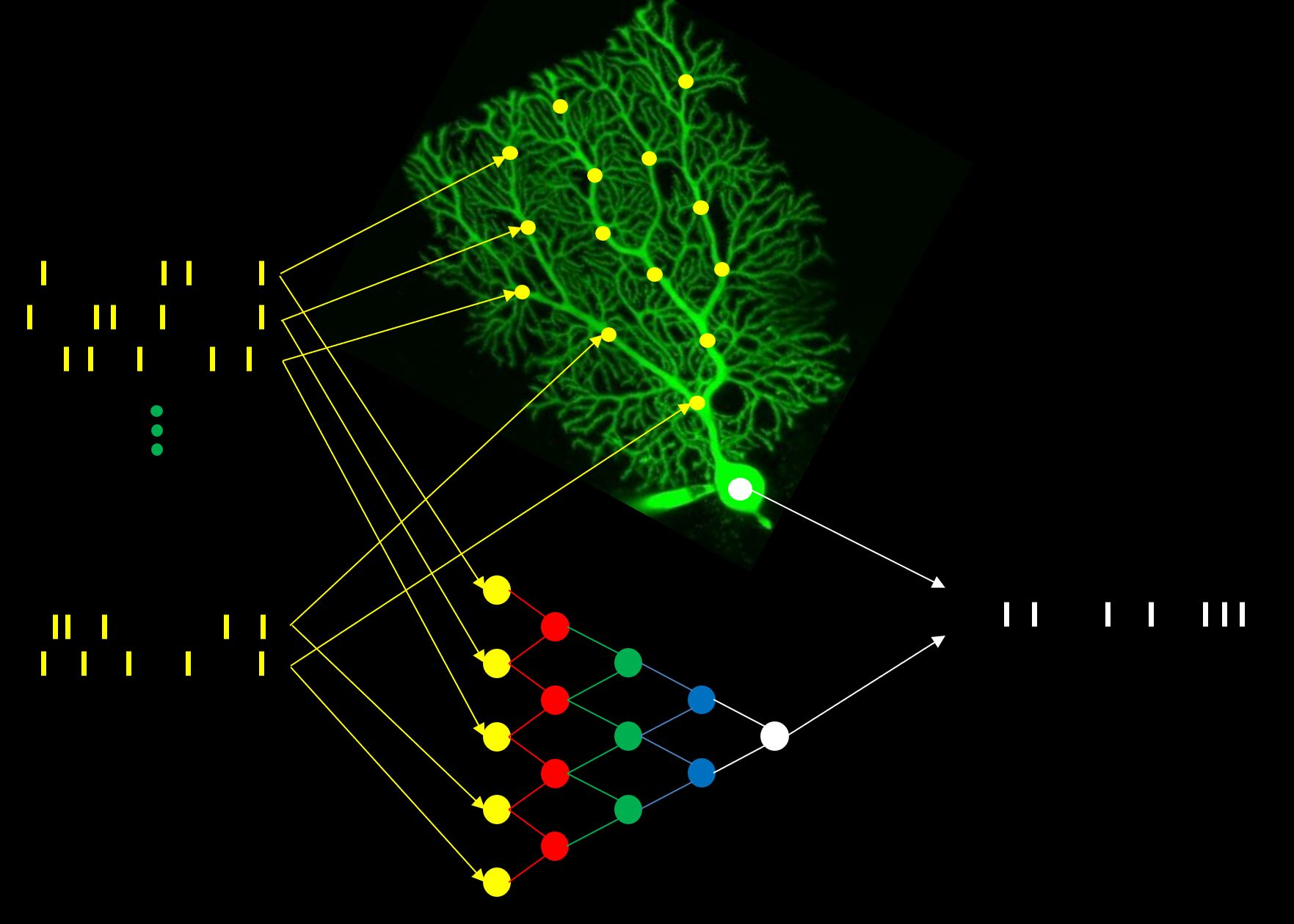 single biological neurons as deep artificial neural networks.