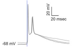WC_optogenetic_stim