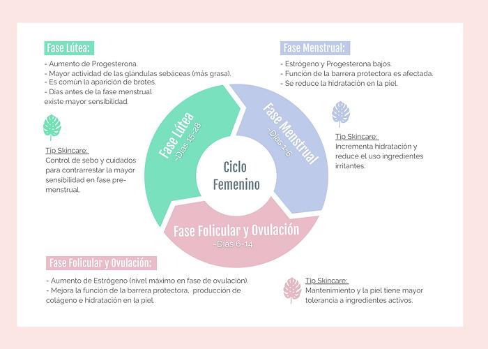 Fases ciclo Femenino y La Piel HR.png