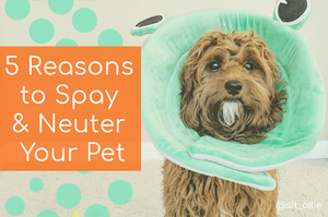 Why should you spay and neuter your pet?