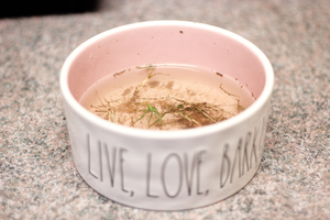 dirty water bowls for dogs