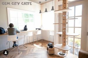 gem city cat cafe