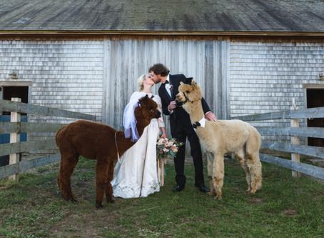 Ashley & John's Alpaca Farm Wedding