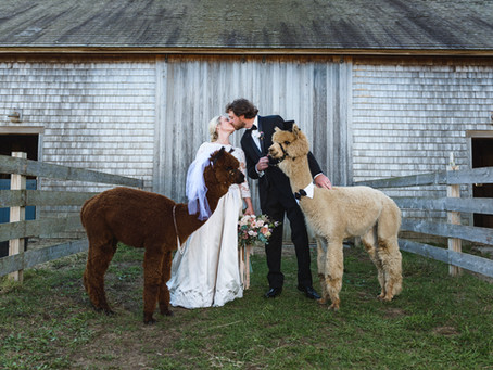 Ashley & John's Alpaca Farm Wedding