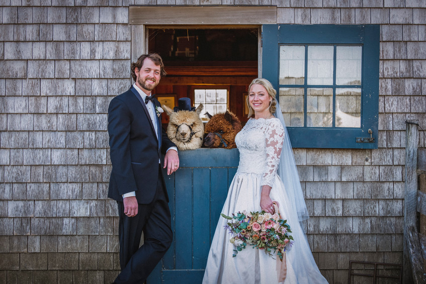 A bride and groom at an Island Alpaca Company wedding on Martha's Vineyard photo by David Welch Photography