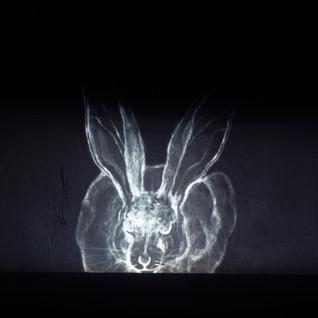 Hare in Situ Animation Still (Dark Hare), 2021