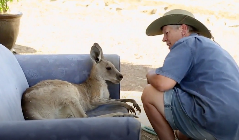 """Meet Queensland's """"roo lady"""""""