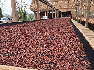 dry-beans.jpg