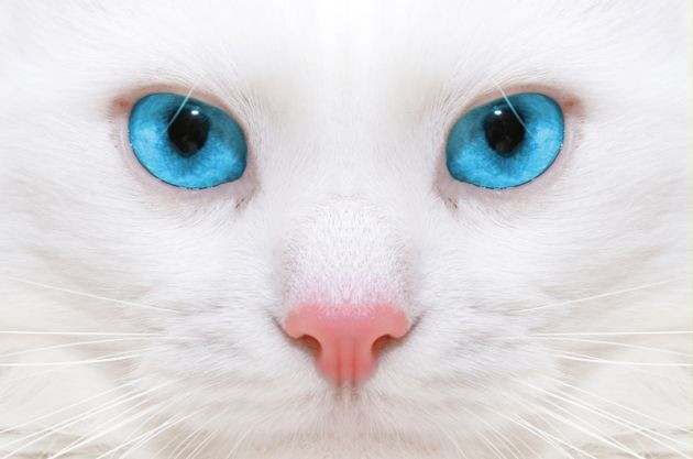 Biologia-Animal-el-ojo-de-los-gatos-1.jpg
